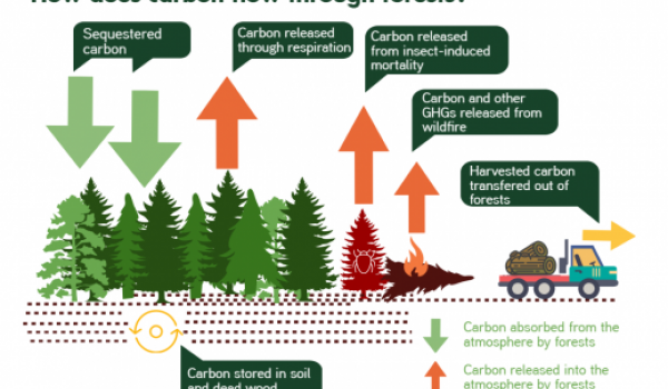 02_forestecosystems_infographic_final_0 copy 3.png